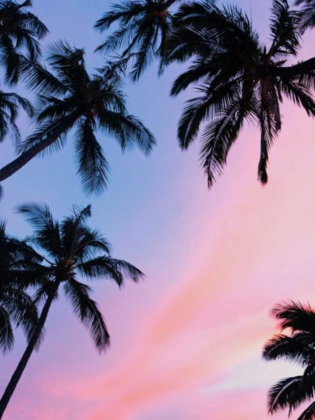 Wenn Hawaii ruft